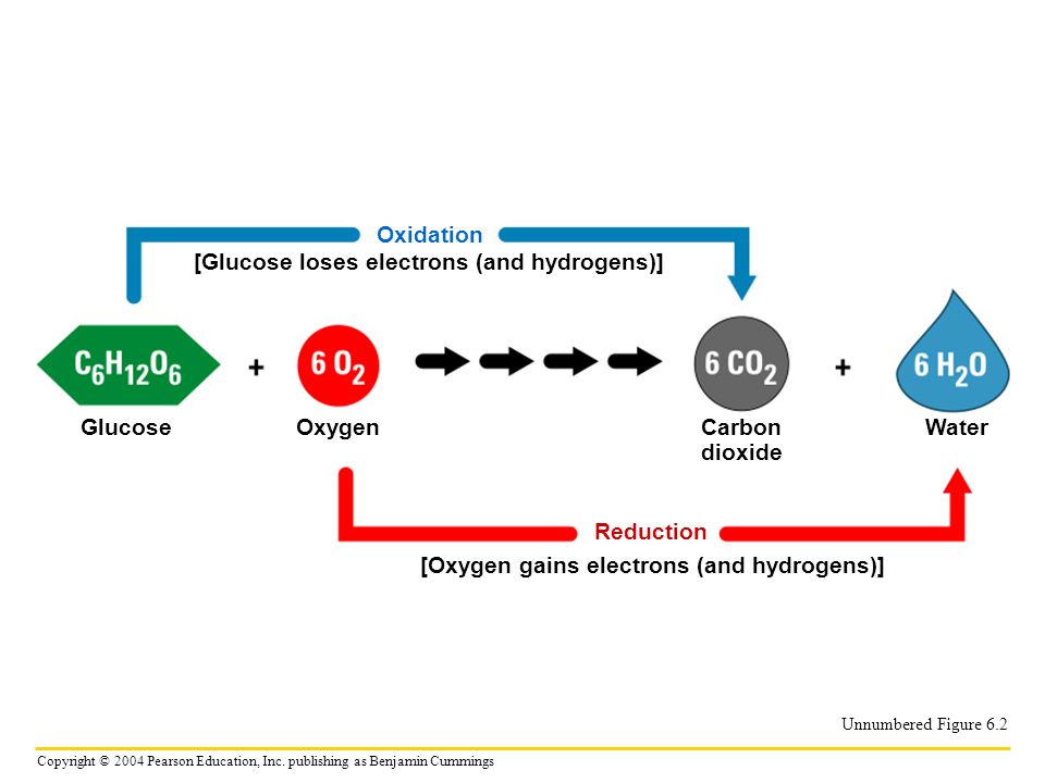 [Glucose loses electrons (and hydrogens)]